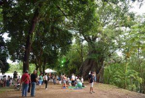 ALT = i parchi e giardini di Recife, Brasile