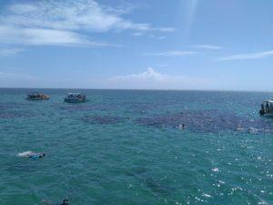 ALT = immersioni nella spiaggia di Maracajaù, Natal, Brasile