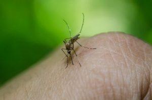 ALT = vaccinazioni per viaggiare in Brasile in Amazzonia