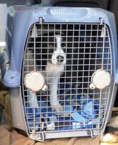 ALT = come trasportare un cane o gatto in aereo