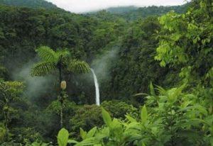 ALT = Amazzonia, Brasile, viaggi nella Foresta Amazzonica