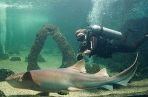 ALT = cosa visitae a Natal, Brasile, acquario