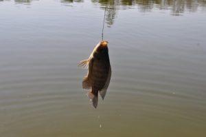 ALT = pesci Brasile